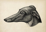 Antique Greyhound Poster