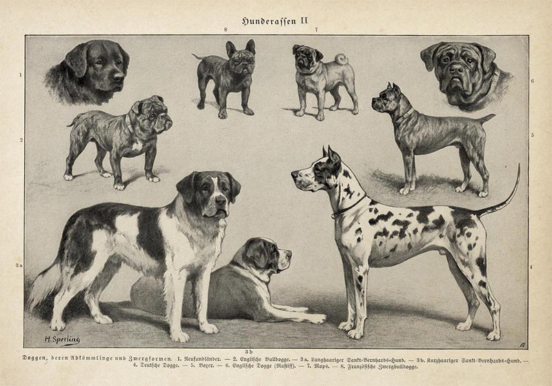 Antique Dog Breeds II Poster