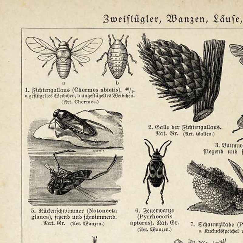 Antique Insects and Flies Poster by KURIOSIS