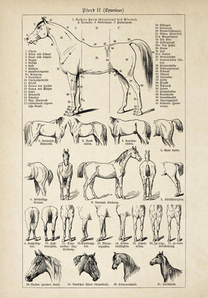 Antique Horses II Poster by KURIOSIS