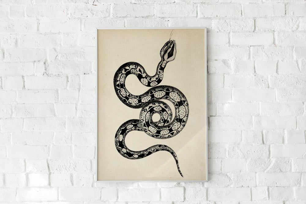 Antique Snake Poster by KURIOSIS