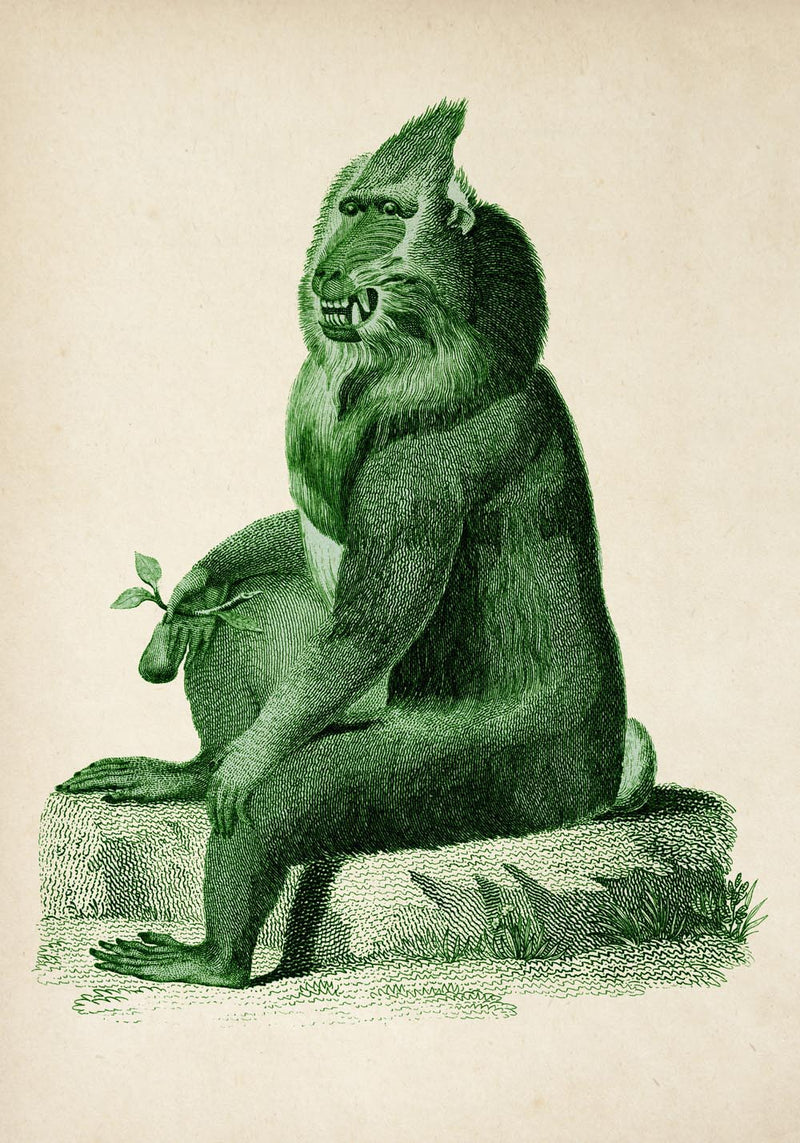 Antique Green Baboon Poster by KURIOSIS
