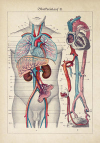 Antique Blood Circulation Poster by KURIOSIS