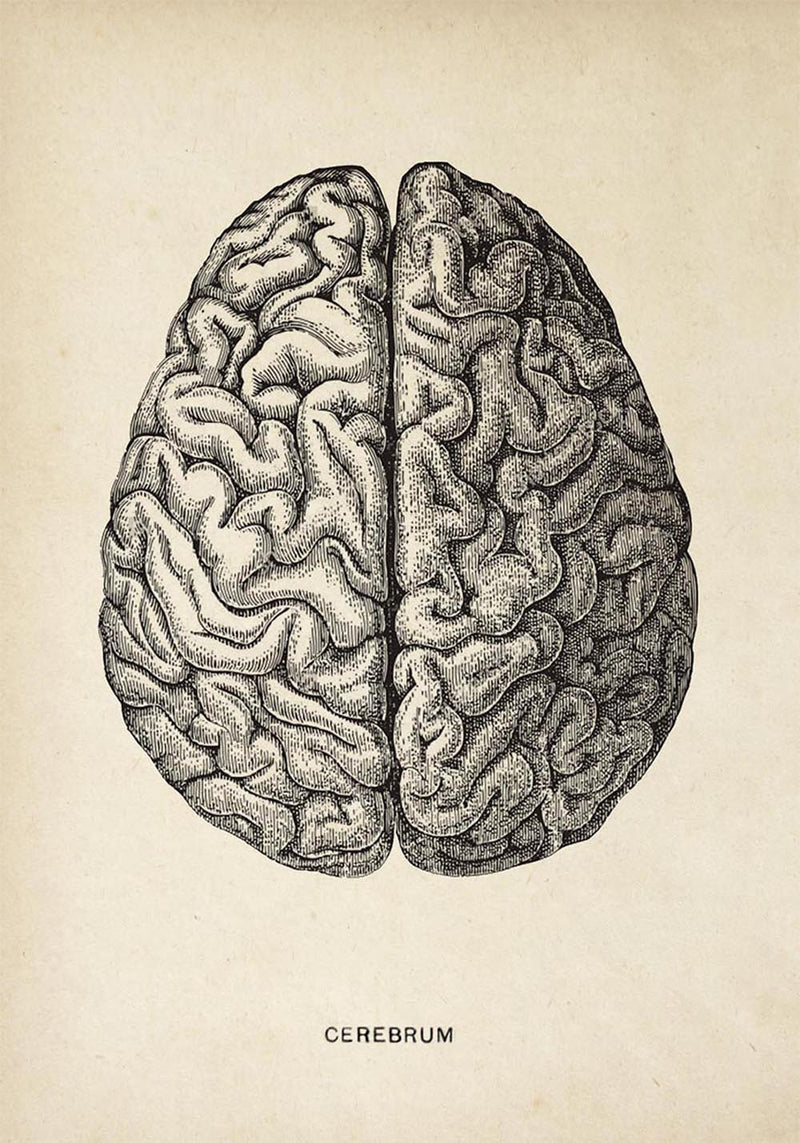 Antique Brain Poster by KURIOSIS