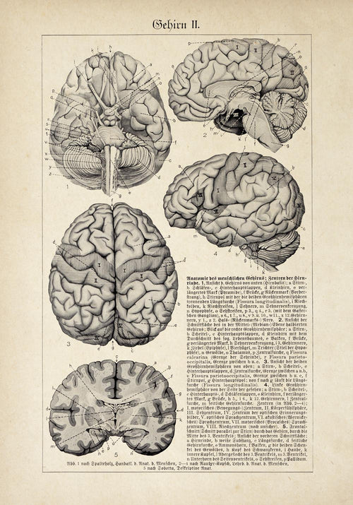 "Vintage Anatomy Poster ""BRAINY"" Set of 2 Prints"