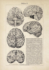 Antique Brain Chart Poster by KURIOSIS