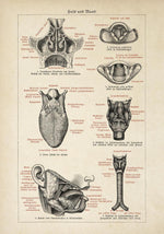 Antique Human Mouth Chart Poster by KURIOSIS
