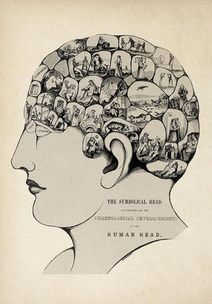 Antique Phrenological Chart Poster by KURIOSIS
