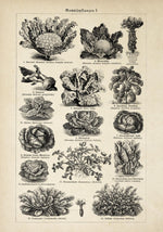 Antique Vegetable Chart Poster by KURIOSIS