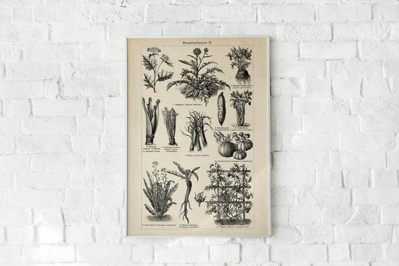 Antique Vegetable Chart II Poster by KURIOSIS