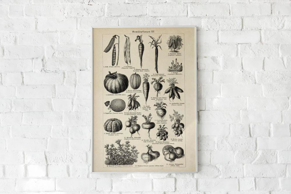 Antique Vegetable Chart III Poster by KURIOSIS