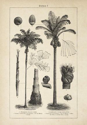 Antique Palm Tree I Poster by KURIOSIS