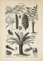 Antique Palm Tree III Poster by KURIOSIS