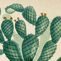 Antique Blooming Cactus Poster by KURIOSIS