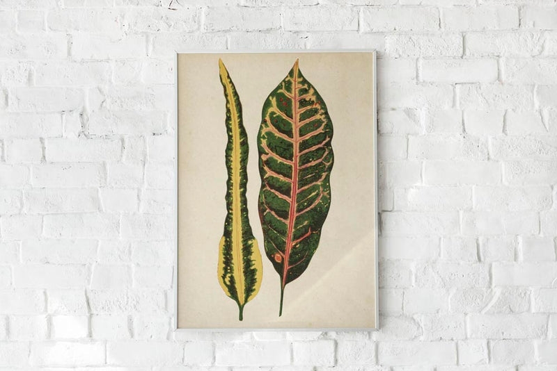 Antique Plant Leaves Poster by KURIOSIS