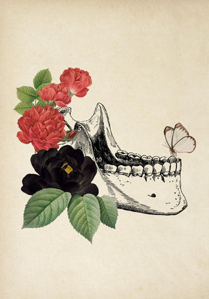 Antique Mandibula Florida Poster by KURIOSIS