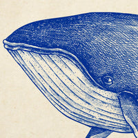 Antique Blue Whale Poster by KURIOSIS