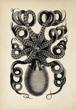 Antique Octopus I Poster by KURIOSIS