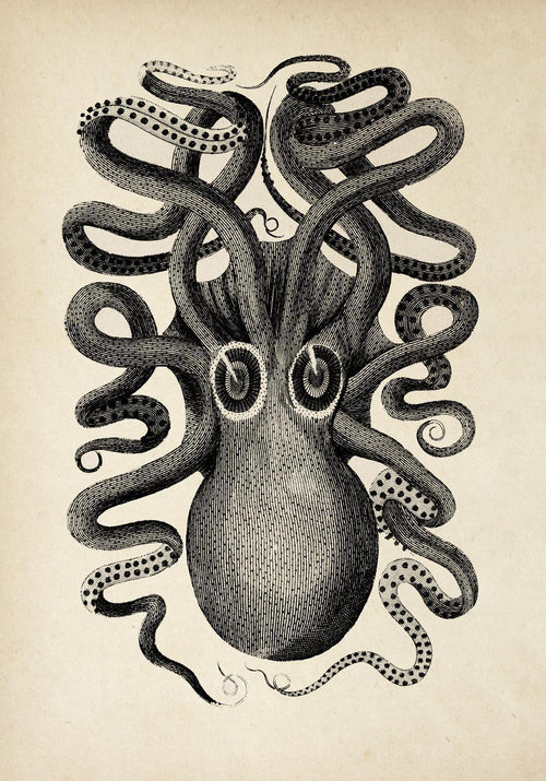 Antique Octopus II Poster by KURIOSIS
