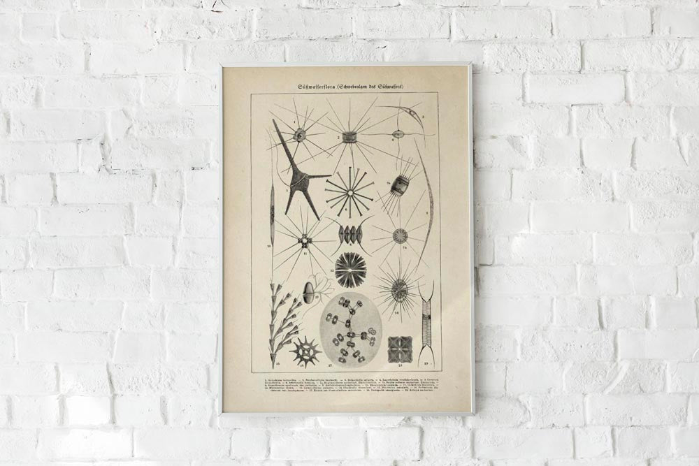 Antique Sea Flowers Poster by KURIOSIS
