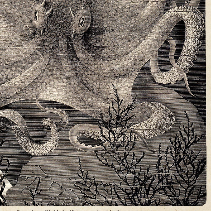 Antique Octopus III Poster by KURIOSIS