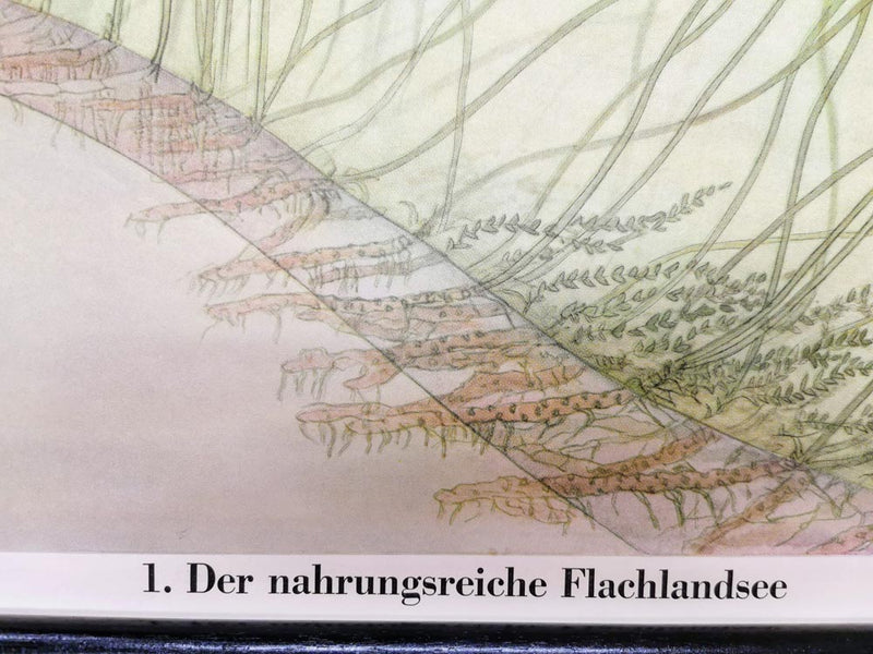 "Vintage Pull Down School Chart ""Flachlandsee II"" from Jung-Koch-Quentell from the 1960s"