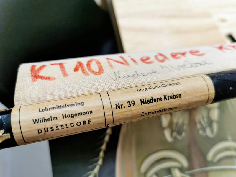 "Vintage Pull Down School Chart ""Niedere Krebse"" from Jung-Koch-Quentell from the 1960s"