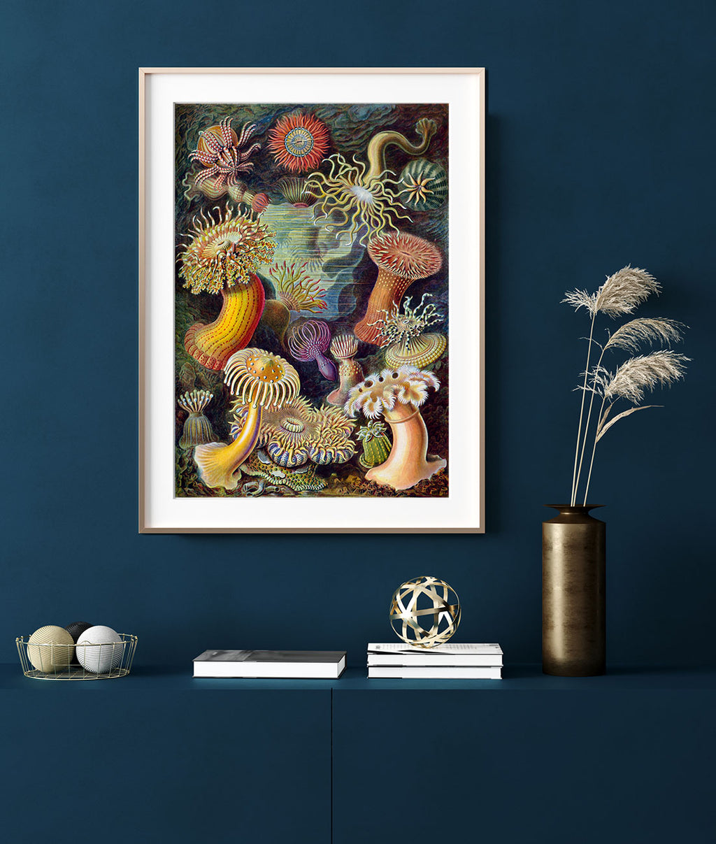 Anemones by Ernst Haeckel Poster