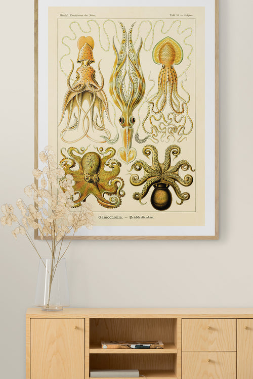 Gamochonia by Ernst Haeckel Poster