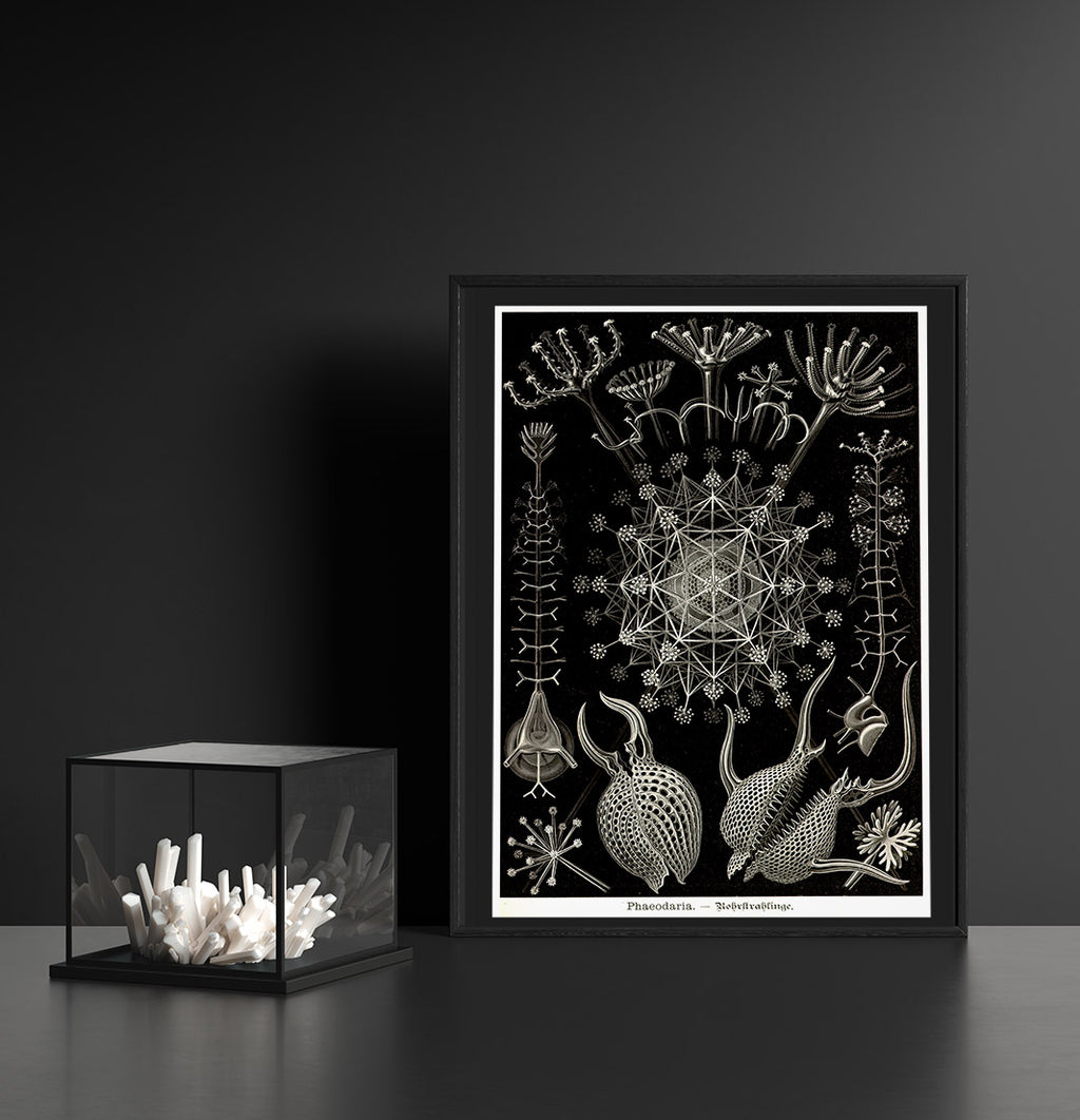 Phaeodaria by Ernest Haeckel Poster