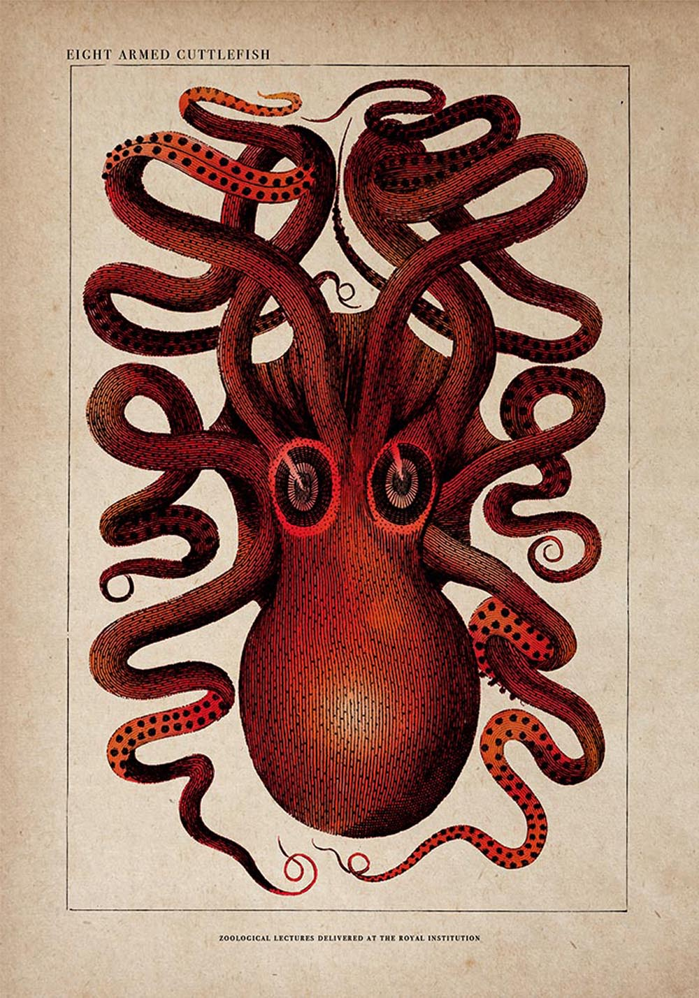 Antique Red Octopus  Poster by KURIOSIS