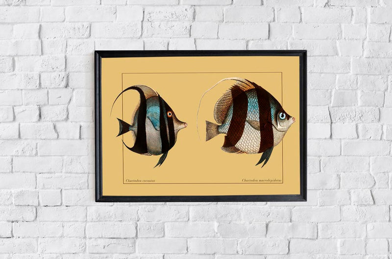 Chaetodon Fishes Poster from KURIOSIS