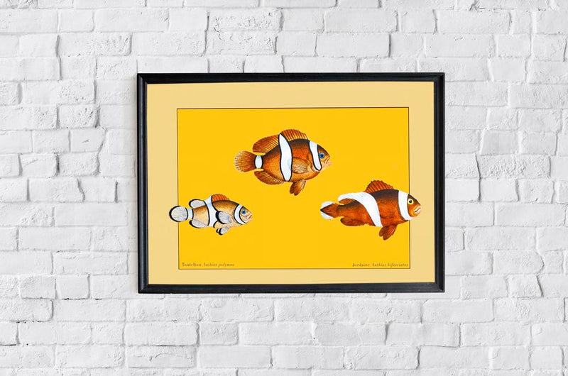 Yellow Anthias Fish Poster