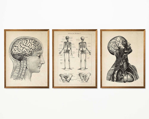 Vintage Anatomy Poster Collection Set of 3 Prints