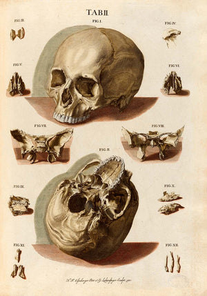 "Vintage Anatomy Posters ""SKELETON"" Set of 3 Prints"