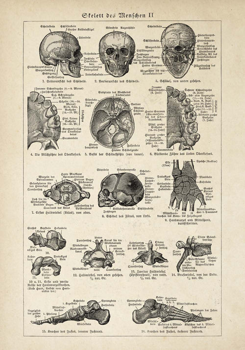 "Vintage Anatomy Posters ""SKULL"" Set of 3 Prints"