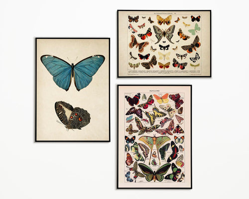 "Vintage Butterfly Posters ""PAPILLONS"" Set of 3 Prints"