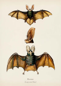 The BAT Set of 3 Poster