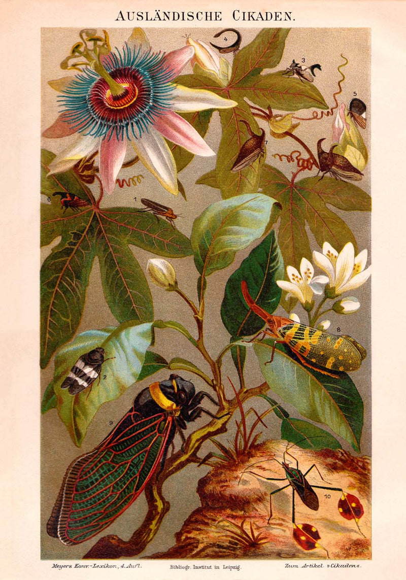 Vintage Insects Illustrations Set of 3 Prints