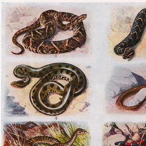 Vintage Snakes Illustrations Set of 3 Prints