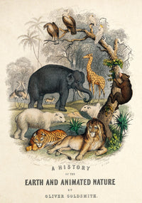 The Big Animal Kingdom Set of 4 Prints