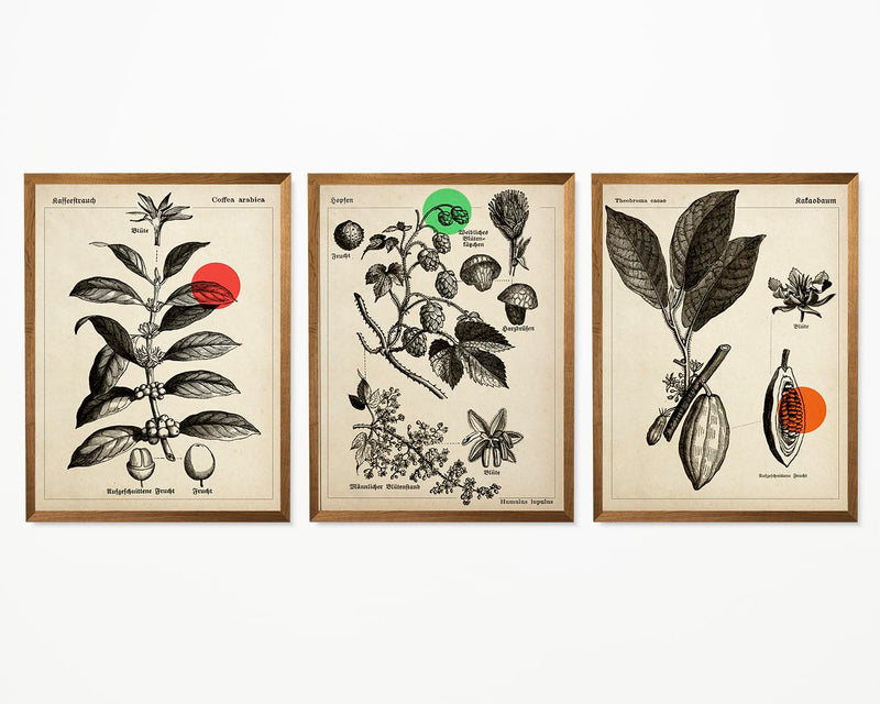 Vintage Coffee Cocoa and Hops Illustrations Set of 3 Prints
