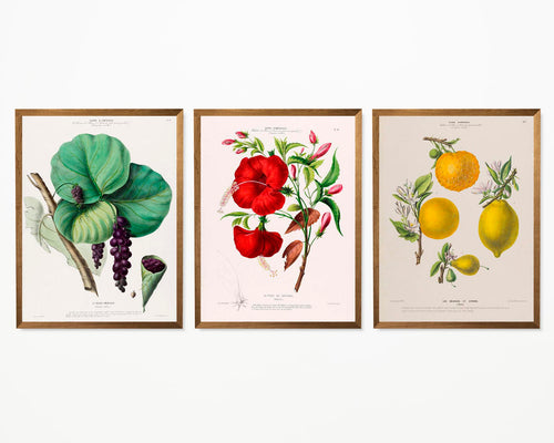 Vintage Flower Illustrations Set of 3 Prints