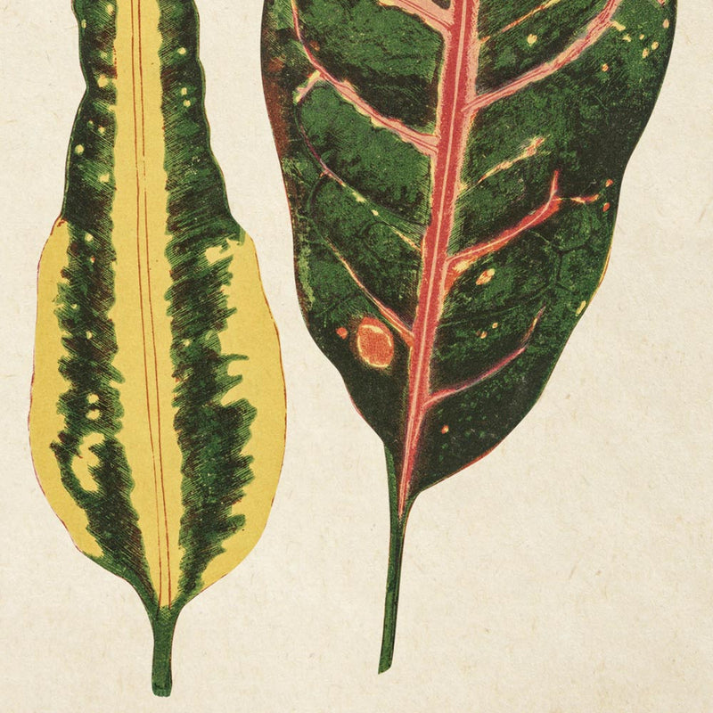 Rare Leaves Set of 3 Prints