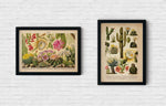 Cactus Poster Set of 2