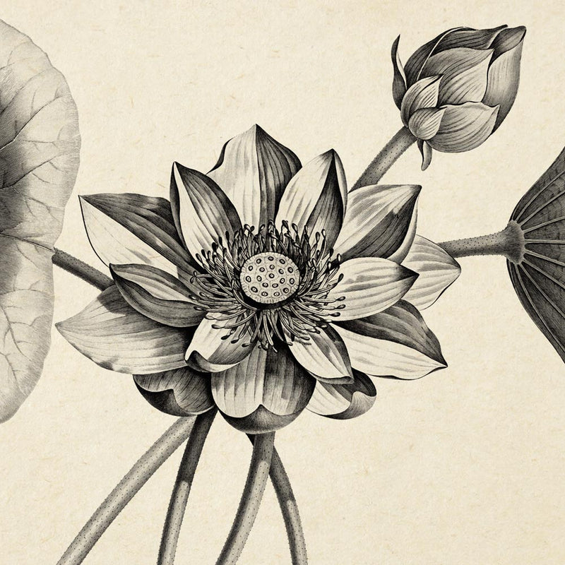 Lotus Set of 3 Prints