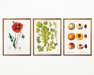 Flower, Leave and Peach Set of 3 Prints