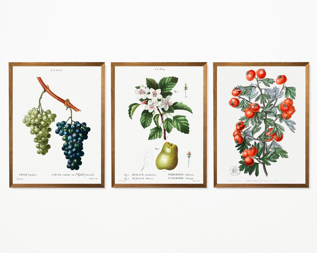 Fruits and Tomate Set of 3 Prints