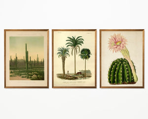 Cactus and Palm Tree Set of 3 Prints