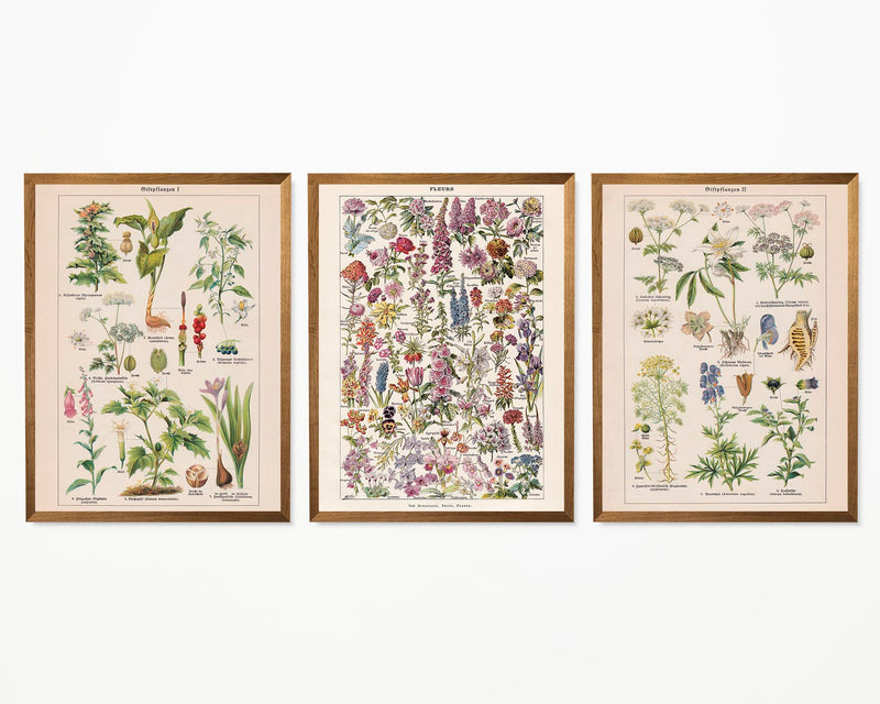Flowers and Toxic Plants Set of 3 Prints